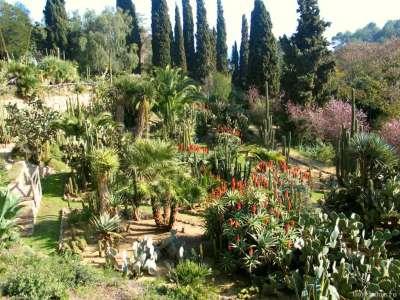 Экзотические растения Ботанического сада