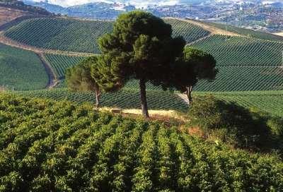 Винодельческое хозяйство Регалиали