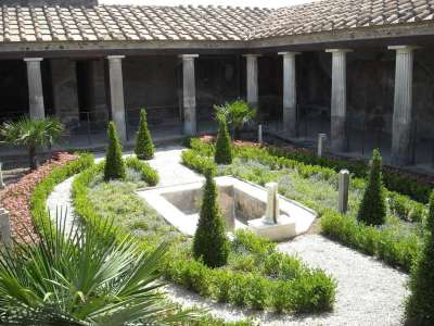 Растительность внутреннего двора