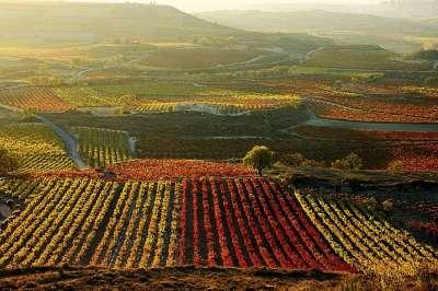 Виноградники Кастилии Ла-Манча