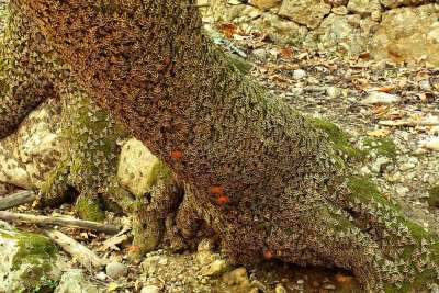 Корни деревьев в бабочках