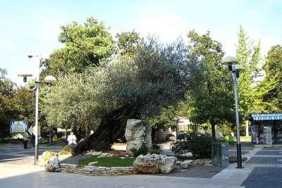 Парк Montirone