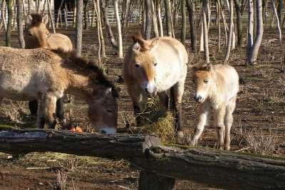 Зоопарк Добрича