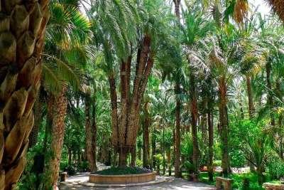 Пальмовый лес в Эльче