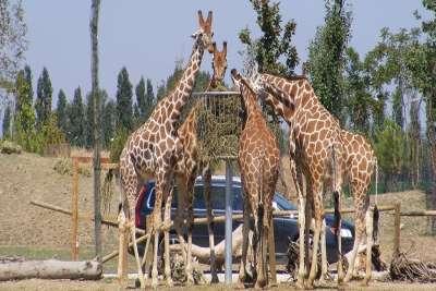 Сафари-зоопарк