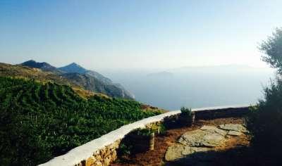 Виноградные плантации на горных террасах Сикиноса