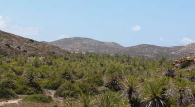 Национальный парк Ваи - пальмовый рай